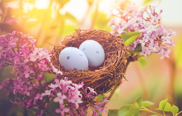 ovos não galados