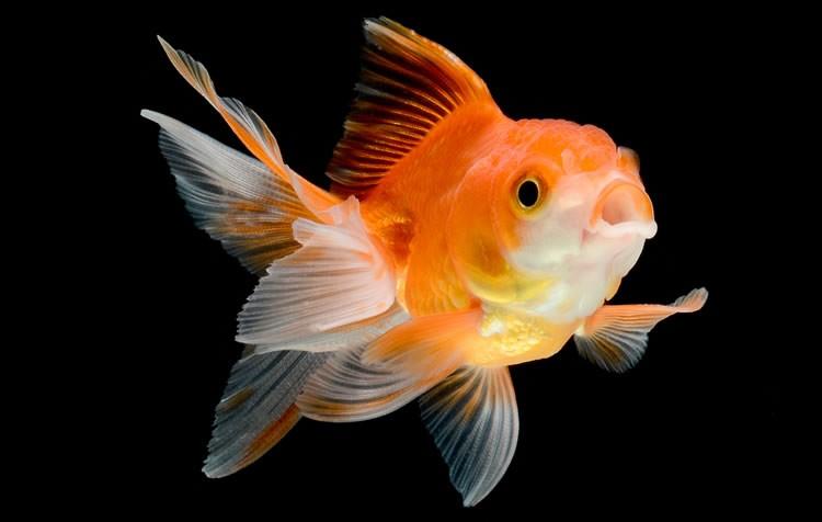 do que meu peixe morreu?