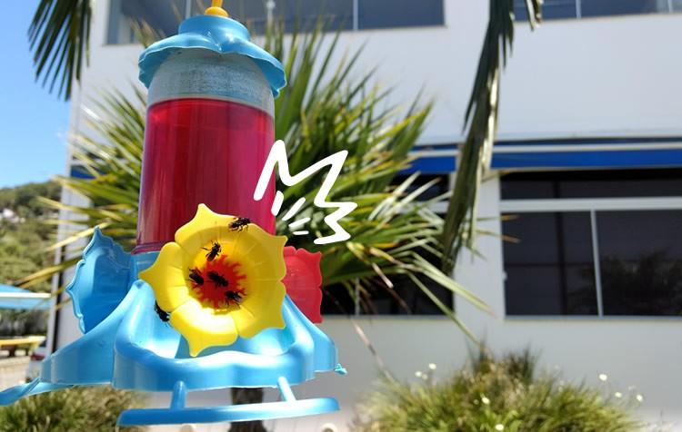 afaste formigas e abelhas do alcon club beija-flor néctar