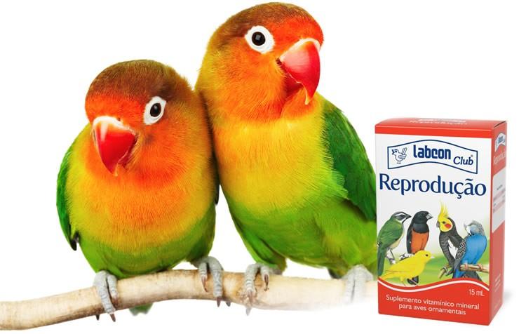 como estimular a reprodução em aves