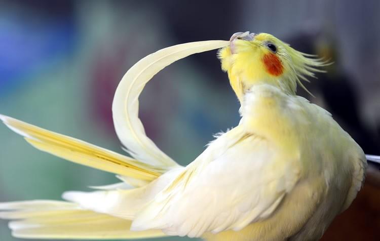 aves arrancando as penas