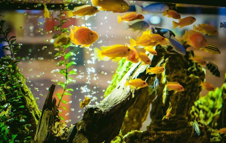 medicamentos afetam a biologia do aquário?
