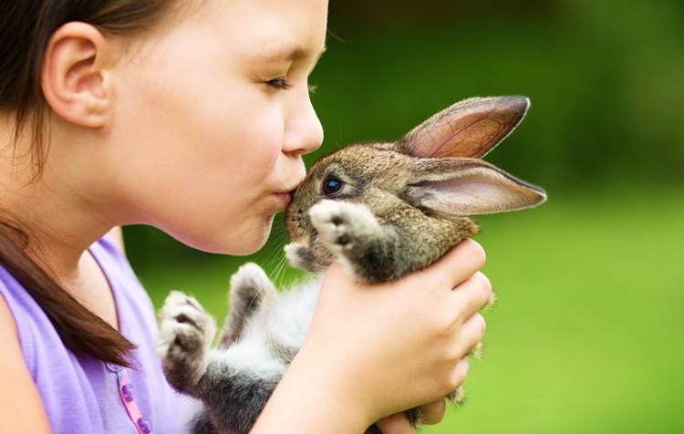 a importância de ter um animalzinho