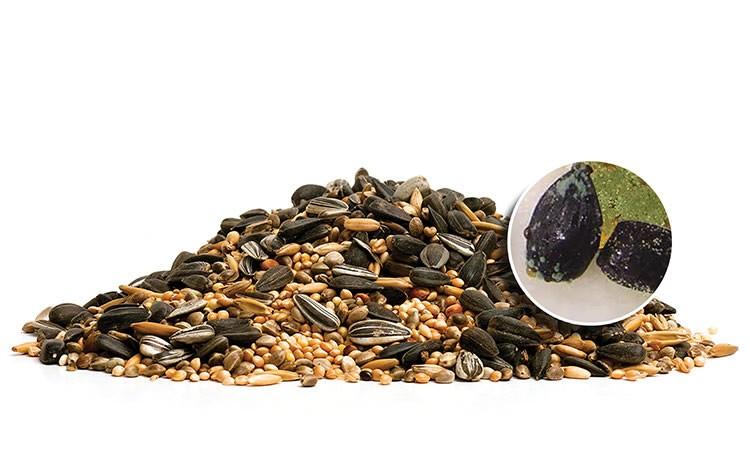 aflatoxinas: o perigo presente nas sementes