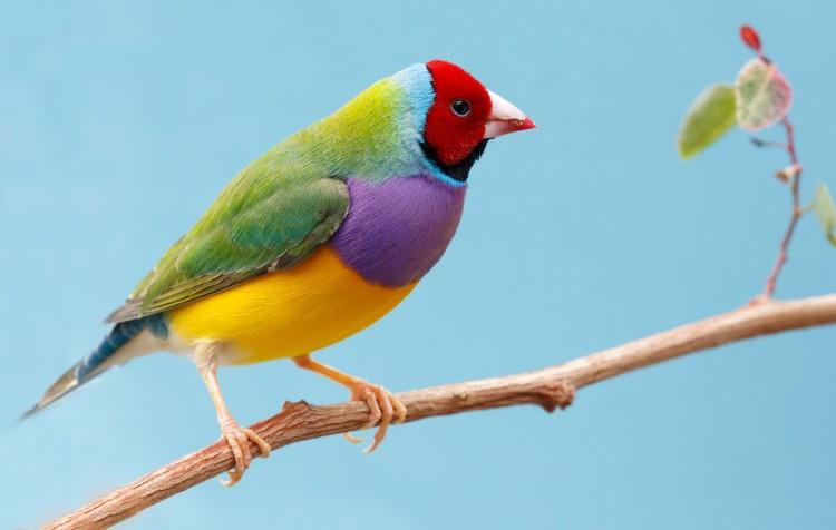aves: a importância das vitaminas