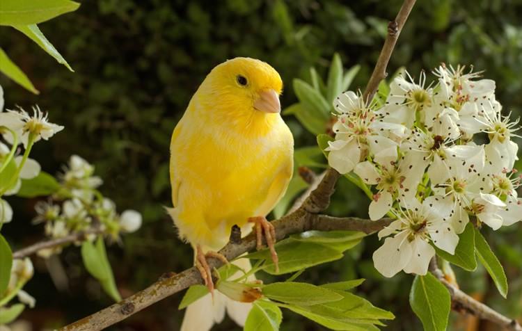 função da moela e digestão nas aves