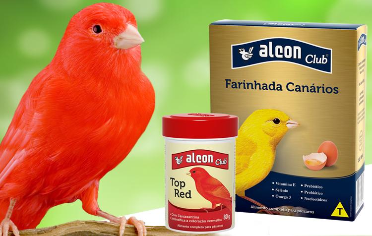 intensificar a coloração de canários vermelhos