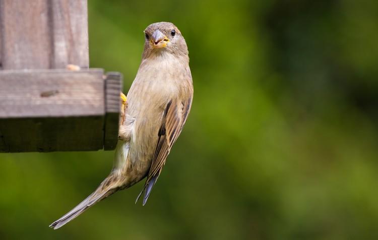 por que as aves preferem as sementes?