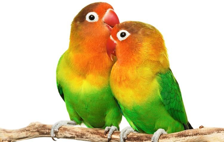 reprodução e ciclo de vida das aves