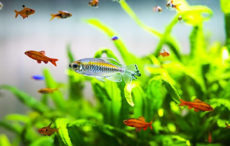 quais peixes colocar no aquário?