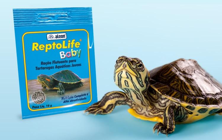 alimentação de tartarugas pequenas