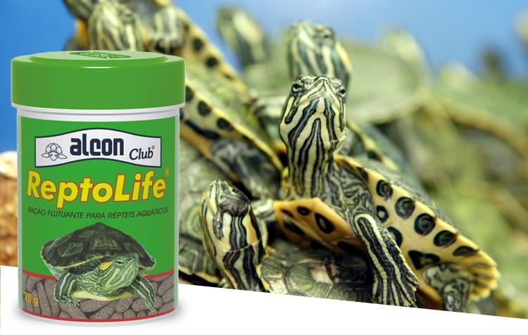 como adaptar as tartarugas para comer alcon club reptolife?