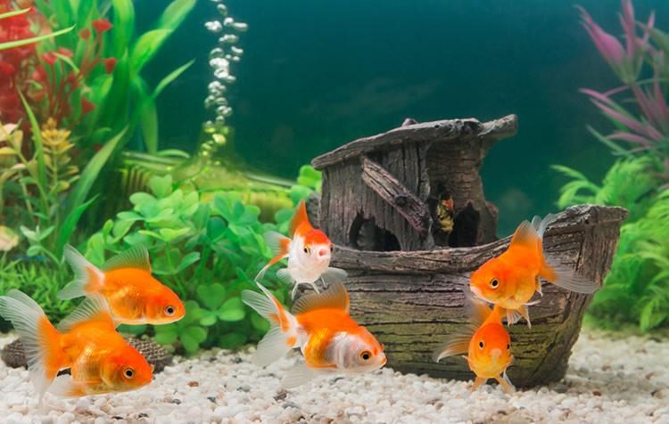 qual o tamanho mais adequado para um aquário?