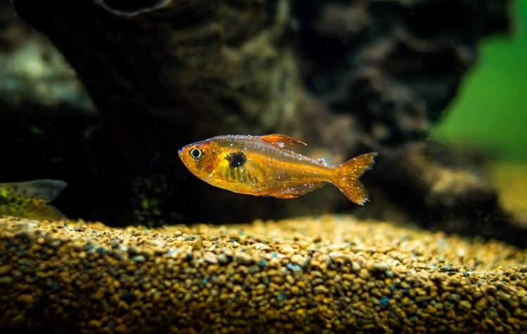 parasitas em peixes de aquários