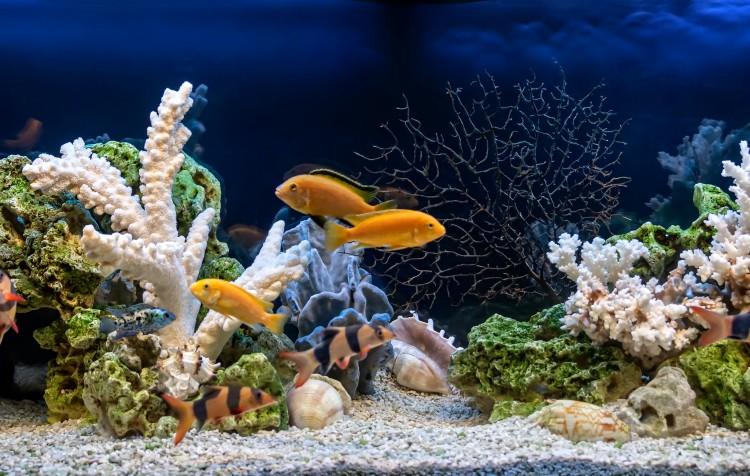 filtragem em aquários
