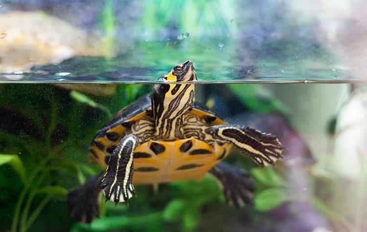 tartarugas: cuidados no inverno