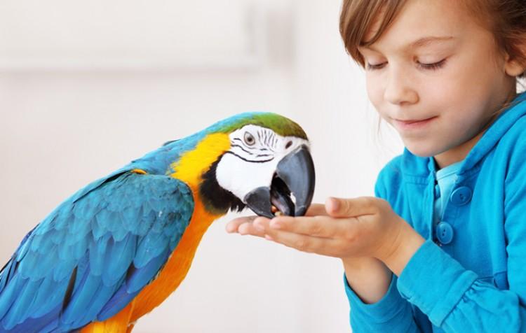 ensine sua ave a comer ração