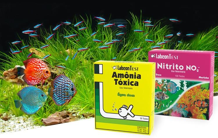 amônia e nitrito