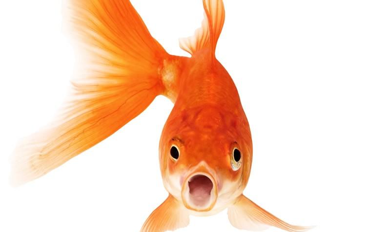 peixe parou de comer