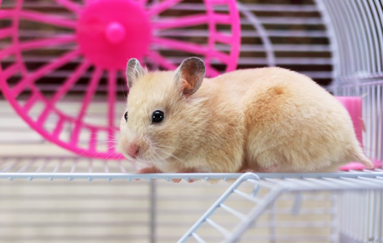 recintos roedores e coelhos